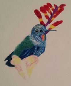 Hummingbird.20150715